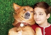犬と人間の極上のラブストーリー