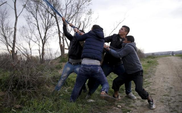 Migrants who are waiting to cross the Greek-FYROM border, try to bring down a tree near the village of Idomeni.