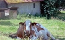 ワールド スピリチュアル ニュース スイス編 vol.7<br>「スローな田舎生活に見つけた心のゆとり」