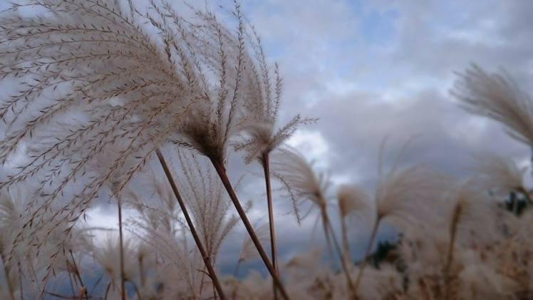 魂を癒す『REINAのピアノヒーリング』Vol.2<br>~すすき野原と空~