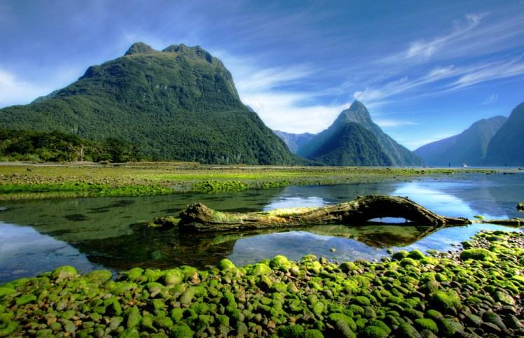 Personality・Soul・Spiritという3つの視点~人間を多角的に捉えるニュージーランドのフラワーエッセンス!Vol9~
