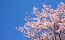 現代版ハーメルンの笛吹き〜北海道テイスト溢れまくりなオーラの話その2