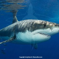 Ocean Things to Be Thankful For: Megalodon is Dead, but We Still Have Sharks (and Whales)