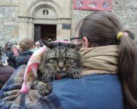 Mimi, una gata de 20 años santiguada por el párroco