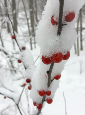 Red berries - white snow