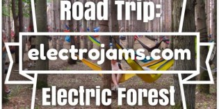 Electric Forest: 6 Must-See Outliers