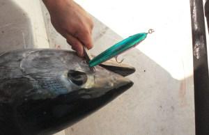 Slamatura di un tonno