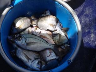 Il pescato