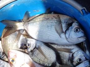 Particolare del pescato