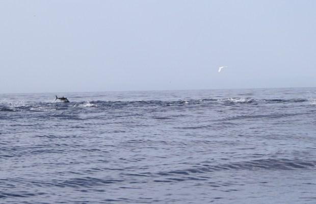 Mangianza di tonni 2012