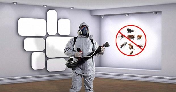 شركة مكافحة حشرات بالطائف البيت الراقي أفضل شركة مكافحة حشرات بالطائف