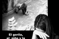 gorila-niño-fragilidad-maternidad