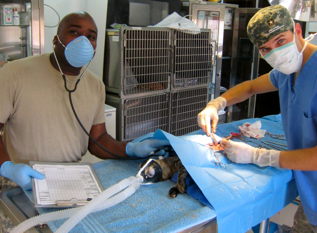 Operating on a cat in our makeshift clinic in Egypt.