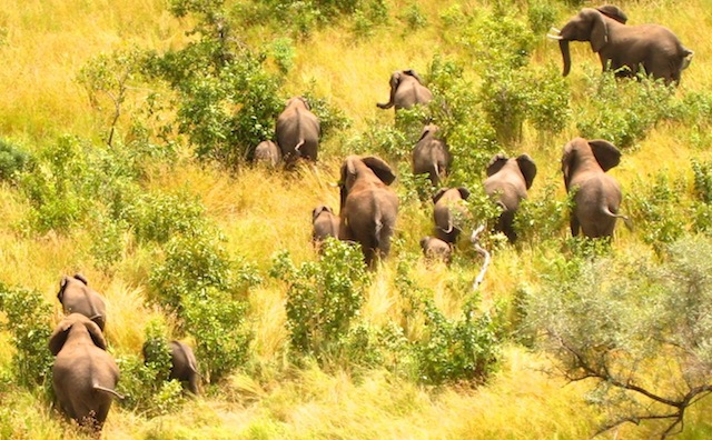 Kruger-Elephants-Helicopter-South-Africa-Veterinary