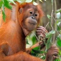 52 percent of biodiversity losses since 1970