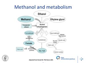 toxic alcohol metabolism