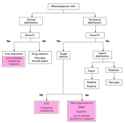maculopapular diagram highlight