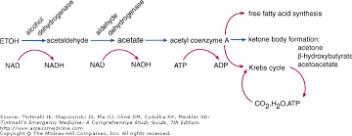 ethanol pathway