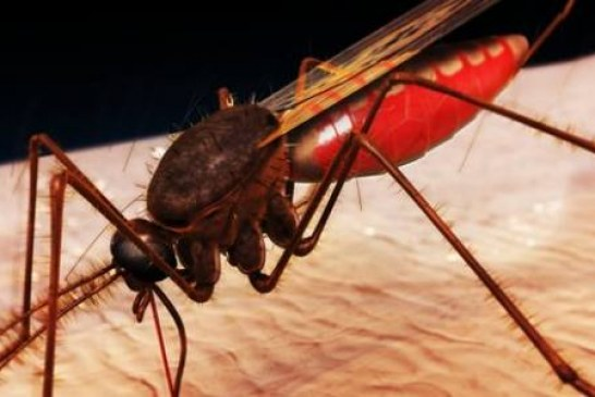 Spiders and insects and bees, oh my! – Dr. Kotze tipps to prevent and avoid dangerous insects bite