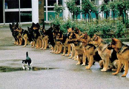 anjing kucing percaya diri bernyali