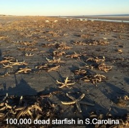 Dead Starfish in Fripp