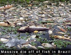 Fish Die off in Brazil