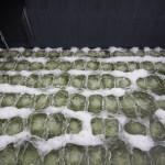 Smaltimento rifiuti liquidi pericolosi - Impianto Berg SpA