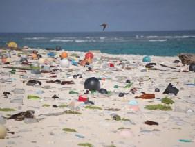Rifiuti di plastica negli ecosistemi marini