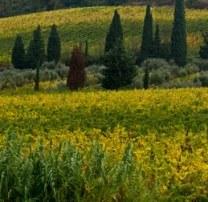 val-orcia-enfant-toscane-voyage-italie