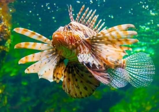 aquarium-barcelone