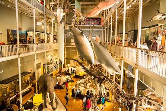 Museum-National-Ecosse
