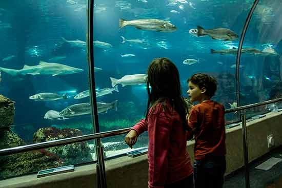 enfants-aquarium-barcelone