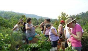 Epagri promove orientação sobre plantas medicinais