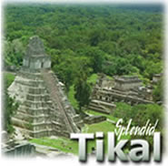 Splendid Tikal Full Day Tour, Guatemala