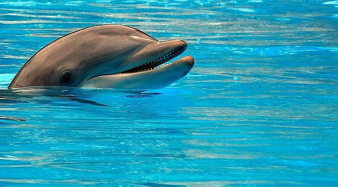 Cortisol estrés y delfines