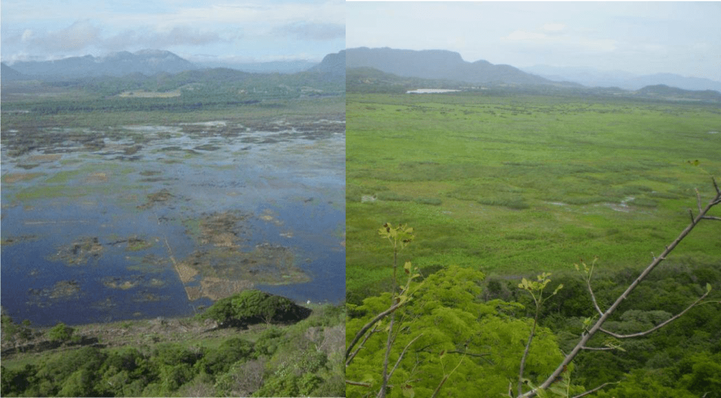 Composite image contrasting the Palo Verde wetland in the 1986 and the wetland in recent days (2012) during the wet seasons. It highlights the encroachment of vegetation and  Typha domingensis (cattail), closing the patches of open water and reducing biodiversity and sites for birds feeding and nesting.