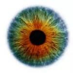 Visão, Olhos e Enxaqueca