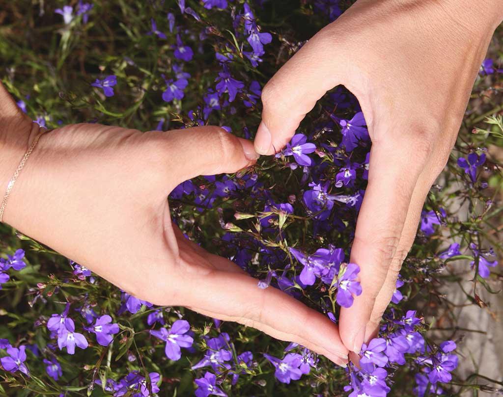 bloom-blossom-flora-804561