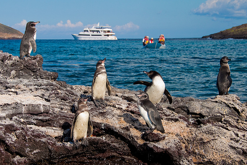 Pinguins Andean Travel