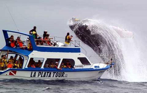 baleines-equateur