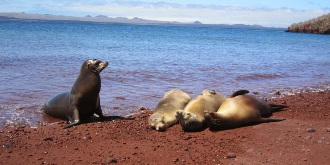 Galapagos-Equateur-rêve-croisière 1