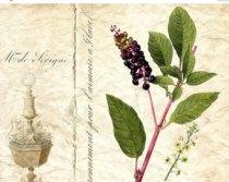 scheda-botanica