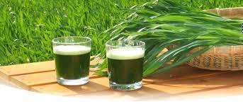 green maga bicchieri