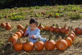 Sam's First Pumpkin Patch Visit