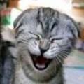 piadas de crentes, humor, deus é humor, três paulistas e um minerim