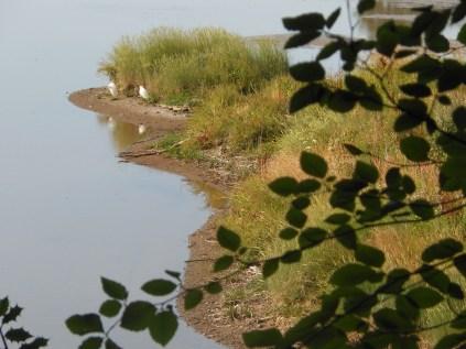 The River Plym estuary provides an excellent habitat for birds.