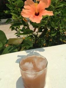 tropical-hibiscus