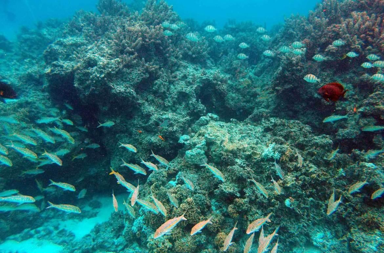 Jardin du Corail, em Bora Bora - O que fazer na Polinésia