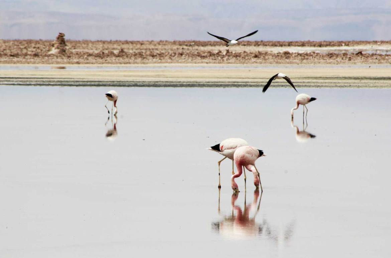 O que fazer no Atacama - Salar do Atacama