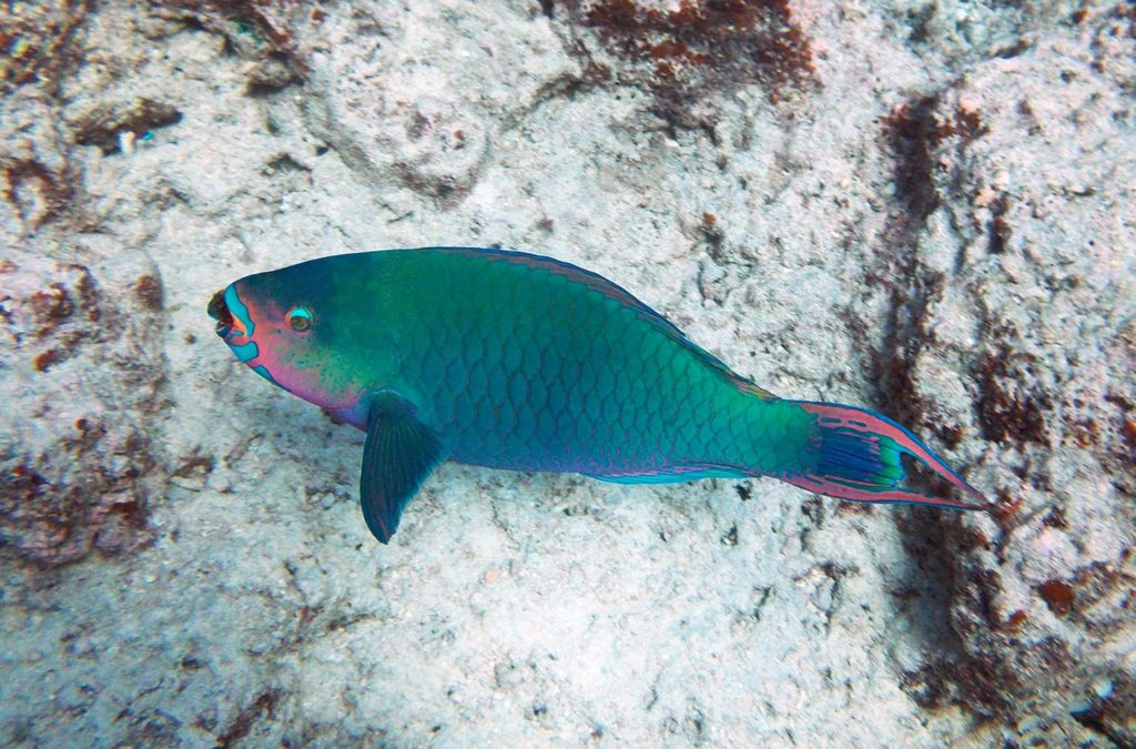 Lugares imperdíveis na Oceania - Grande Barreira de Corais (Austrália)